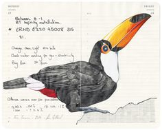 Fran Giffard Toco ToucanGraphite pencil and aquarelle over my Moleskine diary2014