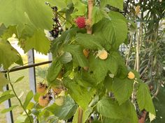 Fruit, Plants, Food, Essen, Meals, Plant, Yemek, Eten, Planets