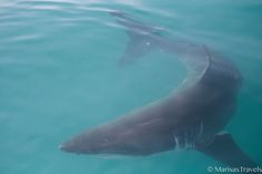 Cage Diving with Great White Sharks in South Africa. www.marisastravels.com