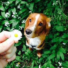 I picked this just for you :) #DoggyMember Woody
