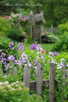 Beautifully country... picket fence and arbor with fragrant dame's rocket and purple allium. Urns for a bit of formality.