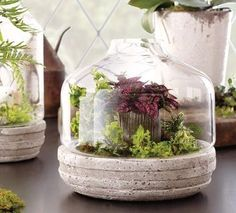5 gorgeous ways to use succulents, flowers, gardening, succulents, terrarium, Glass domes and terrariums are showstoppers when filled with succulents and mosses This dome from World Market would look great with succulents nestled inside