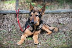 Gazdira várnak - Vigyél Haza Alapítvány, az árva és sérült kutyákért - Fogadj örökbe egy kutyát! Goats, Animals, Animales, Animaux, Animal, Animais, Goat