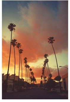Streets lined with palm trees back home in California <3