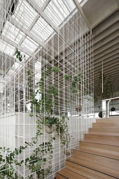 Interior Planting Ideas. 'Lattice' like wall to hold pot plants.