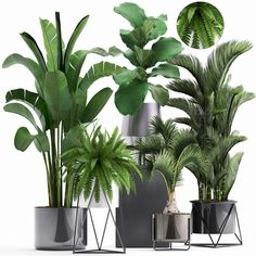 Rare Indoor Plants for Sale – Indoor Design Big Indoor Plants, Big Plants, Faux Plants, Exotic Plants, Green Plants, Indoor Garden, Potted Plants, Big House Plants, Flower Pot Design