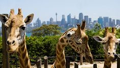 Taronga Zoo, Sidney