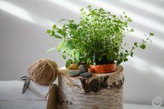 Idee fai da te :: Le piante aromatiche sempre a portata di mano