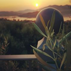 See 5 photos and 1 tip from 62 visitors to Ligia port. Plant Leaves, Sunrise, Plants, Sunrises, Plant, Sunrise Photography, Rising Sun, Planting, Planets