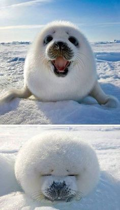 Do you wanna build a snowman?! JK! I'm right here what do u need a snowman 4? Cute Funny Animals, Cute Baby Animals, Animals And Pets, Adorable Animals, Fluffy Animals, Happy Animals, Super Cute Animals, Wild Animals, Nature Animals