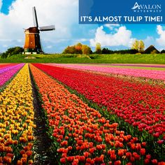 Does your travel bucket list include getting to Holland for this beautiful, festive time of year? Join us on a Tulip Time Cruise!