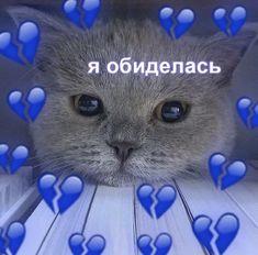 Cat Mem, Sweet Memes, We Bare Bears Wallpapers, Russian Memes, Cute Anime Chibi, Cute Love Memes, Bear Wallpaper, Cute Couples, Bff