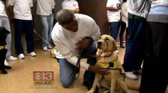 An new program in a Maryland prison is allowing inmates to train service dogs for injured veterans. #ServiceDogs #VetDogs