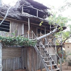 Ever slept in a #treehouse? This one has a bed bathroom #solarpower and #rainwater catchment. @diamondbeachvillagelamu didn't intend to be an #ecolodge but realized that all of the #sustainablepractices advocated by #responsibletravel advocates were simply a part of life in #manda #lamu #kenya.  Being green was a necessity not a trend or marketing tool.  A humbling reminder to consider our common resources as finite as they truly are. . . . #diamondbeach #lamutamu #barefoottravel…