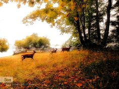 Deer Family by wilwilgao123. Please Like http://fb.me/go4photos and Follow @go4fotos Thank You. :-)