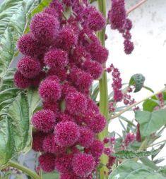 Amazing, Health, Garden, Plants, Gardening, Orchards, Garten, Health Care, Lawn And Garden