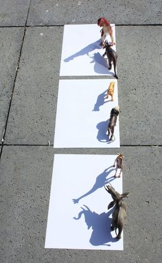 The first bit of sunshine that comes your way is the perfect time to get busy with animal shadow drawing! Shadow Drawing, Shadow Art, Reggio, Drawing For Kids, Art For Kids, Writing Prompts For Kids, Kids Writing, Owl Quilts, Felt Owls