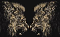 lion wallpaper 5EC
