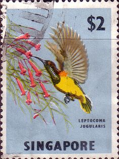 Singapore 1962 SG 76 Yellow-bellied Sunbird Bird Good Used SG 76 Scott 68
