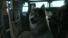 Metal Gear Solid 5: The Phantom Pain - Wolf companion - DD