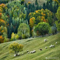 The black sheep - Countryside of Romania Camping Places, Places To Travel, Beautiful Landscapes, Wonders Of The World, Countryside, Beautiful Places, Black Sheep, Brasov Romania, Outdoor Adventures