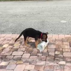 Don't worry human, I got it