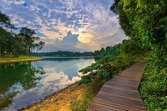 MacRitchie Reservoir Park, Singapore