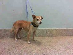 Lucky is in the Miami-Dade Animal Shelter abandoned with nothing.  ID#:  a1070115.