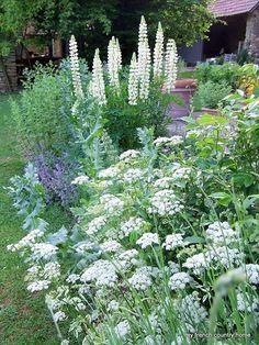 Love white flower gardens