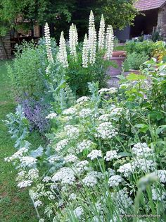 Love white flower gardens