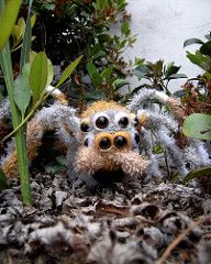 """What Spiders are """"Good For""""?"""