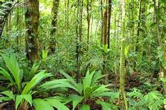 An article describing the predicted effects of climate change on Costa Rica's ecosystems. Forest Plants, Climate Change Effects, Animal Species, How To Speak Spanish, Costa Rica, Shrubs, Creations, Environment, Tropical