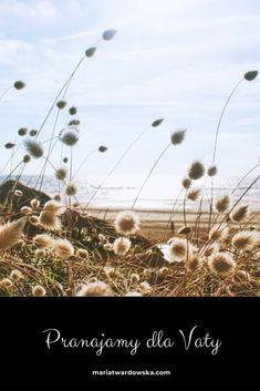 Dandelion, Flowers, Plants, Blog, Dandelions, Florals, Planters, Flower, Blossoms