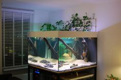 freshwater stingray and Discus tank tropical aquascape - Aquarium Aquascape, Betta Aquarium, Aquascaping, Aquarium Setup, Betta Fish Tank, Aquarium Design, Fish Tanks, Aquarium Ideas, Discus Tank