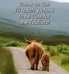 Muckle coo an' wee coo;-)