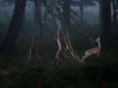 """Еленът-лопатар се наслаждава в мъглата на Richmond Park в Лондон на победоносни есенни сблъсъци със съперници.""""Това е страхотно време просто да се скиташ из парка с камера"""", – пише авторът на снимкатаSzymon Bakota.""""Намерих идеалното място в малка гориста местност, където…"""