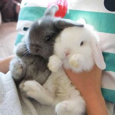 Cute Overloads...Bunnies