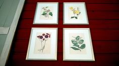 Botanical hand colored images