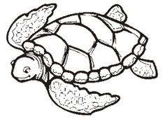 Turtle Coloring Page Free Online Printable Pages Sheets For Kids Get The Latest Images Favorite To