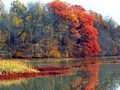 Shades of Autumn 8 by MadGardens.deviantart.com on @deviantART