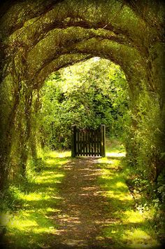 Gorgeous tree tunnel and intriguing gate - Nature's Archway The Secret Garden, Secret Gardens, Hidden Garden, Tree Tunnel, Landscape Designs, Landscape Architecture, Modern Landscaping, Landscaping Ideas, Garden Landscaping
