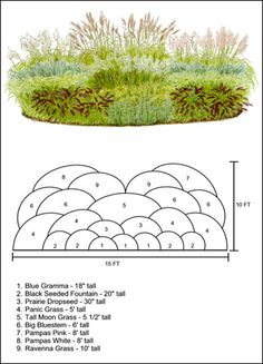 Ornamental Grass How-To #3