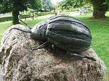 Leptinotarsa decemlineata - Wikipedia