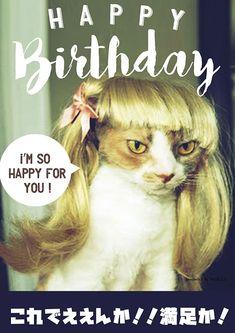 Birthday Photos, Birthday Cards, Happy Birthday Animals, Funny Cats, Funny Animals, Harry Birthday, Happy Birthday Wallpaper, Merry Christmas, Presents