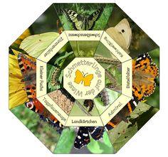 Legekreis Schmetterlinge