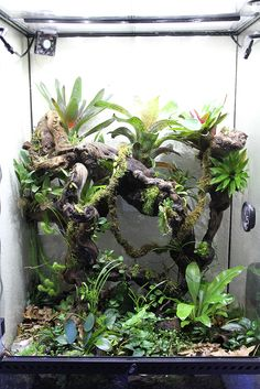 The Frog Room Thread - posted in Builds & Setups: After a suggestion by one of our forum members I agreed it would be a great idea to have a place where you can view all our members frog-room pictures on one thread.   For any comments or question about this thread CLICK HERE   This thread is for rooms/areas totally dedicated to frogging. If you have a dedicated room/area that you wish to be added to the thread please PM me or alternatively create your own frog...