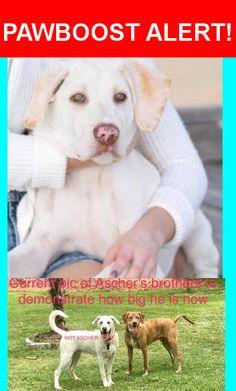 Please spread the word! Ascher was last seen in Daphne, AL 36526.    Nearest Address: Smugglers Gap st
