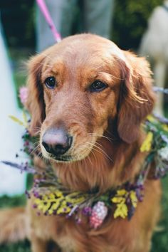 hip dog with #floral #wreath