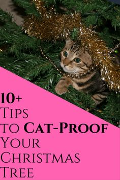 10+ Tips to Cat-Proof Your Christmas Tree This Holiday Season | The Crazy Cat Lady Life