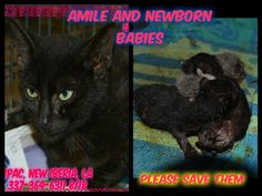 Amile and new born babies | Other - YouCaring.com